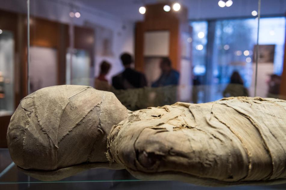 In einer Vitrine wird die Münster-Mumie zu sehen sein.