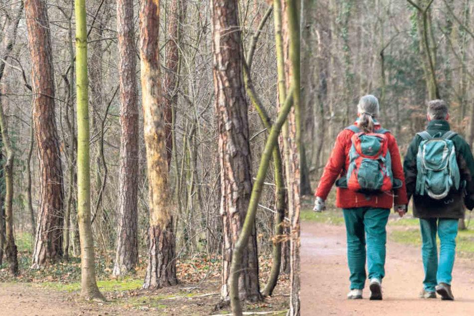Dresden: Kettensägen-Massaker im Waldpark: Mehr als 300 Bäume müssen fallen