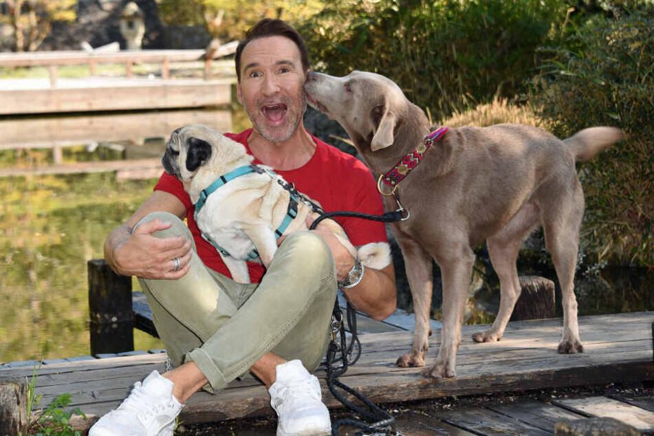Der Moderator, Hundeliebhaber und Hundetrainer Jochen Bendel mit seinen Hunden Khaleesi (Labrador, r.) und Gizmo (Mops).