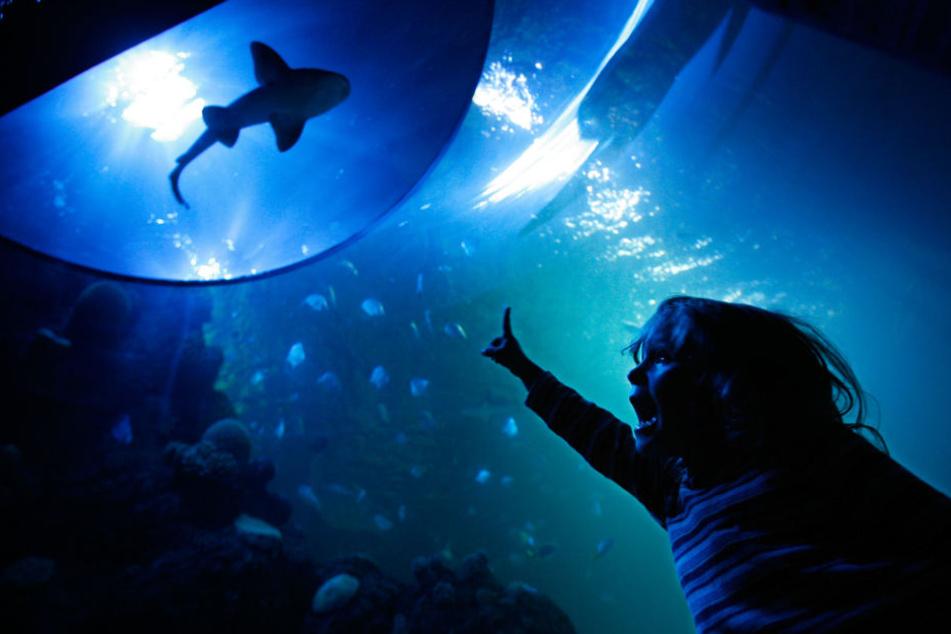 In Pfungstadt soll das größte Hai-Aquarium Europas entstehen. (Symbolbild)