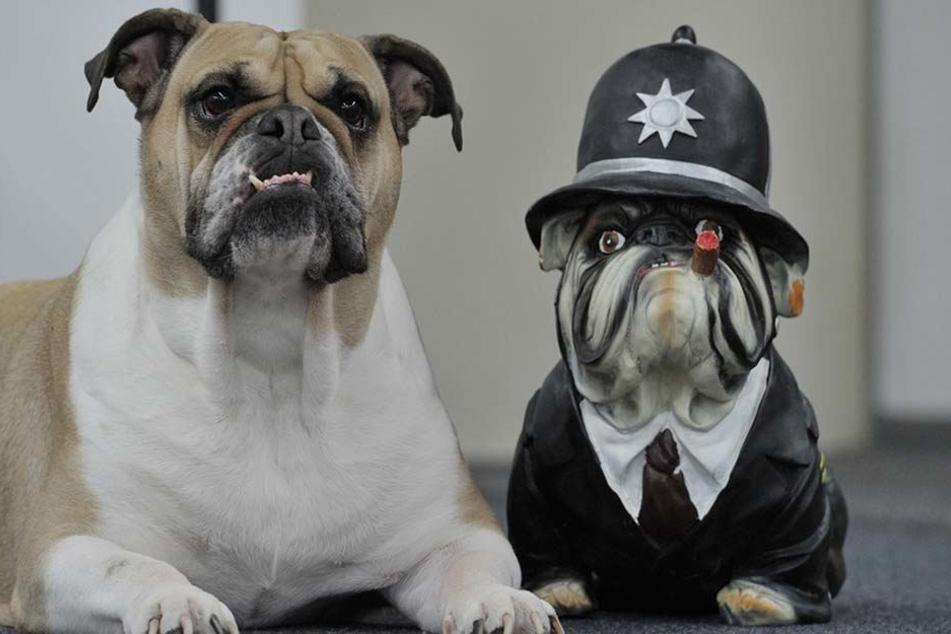 Wer sein Grundstück von einem Hund bewachen lässt, könnte in Leipzig bei der Hundesteuer künftig bessergestellt werden.
