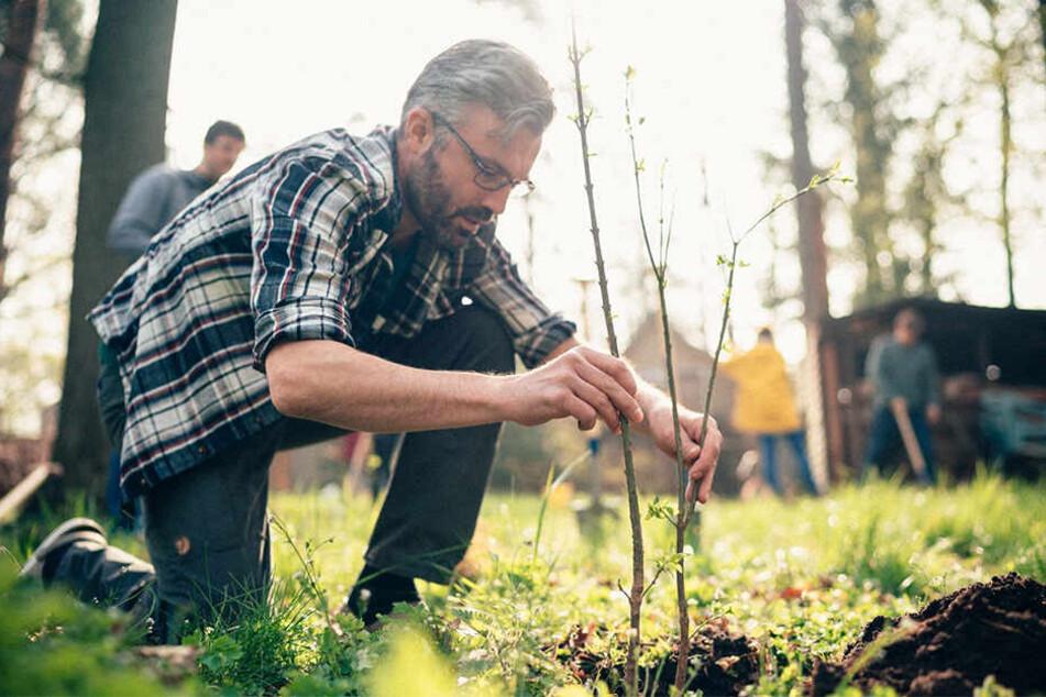 """""""Mein Baum - Mein Dresden"""": Ronny Scholz (42) während einer Probe-Pflanzung, die in Kooperation mit der Stadtentwässerung im April stattfand."""