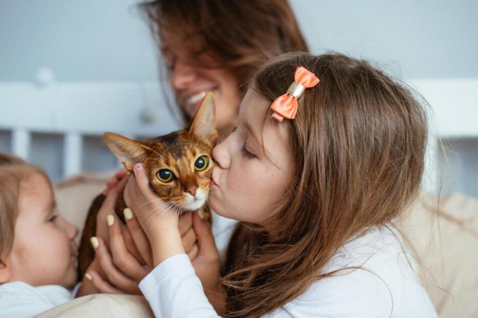 Das Leben mit Katzen ist für Kinder eine große Bereicherung.