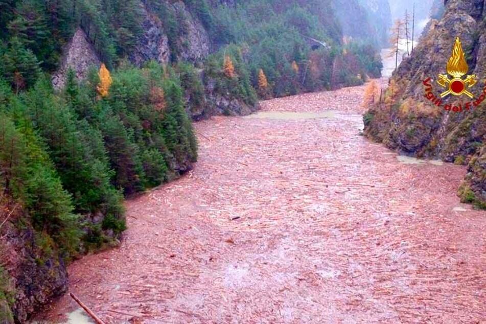 Vom Sturm umgerissene Bäume treiben im Fluss Piave.