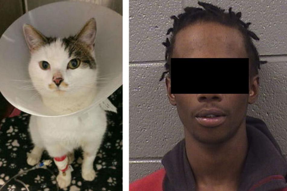 Der 18-Jährige quälte die Katze und streamte live auf Facebook.
