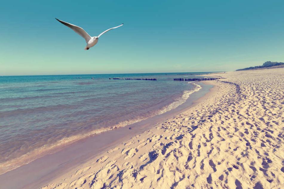 Die Landschaft an den Ostsee-Stränden mit blauem Meer und weißem Sand soll auch in diesem Jahr wieder so schön aussehen wie zuvor.