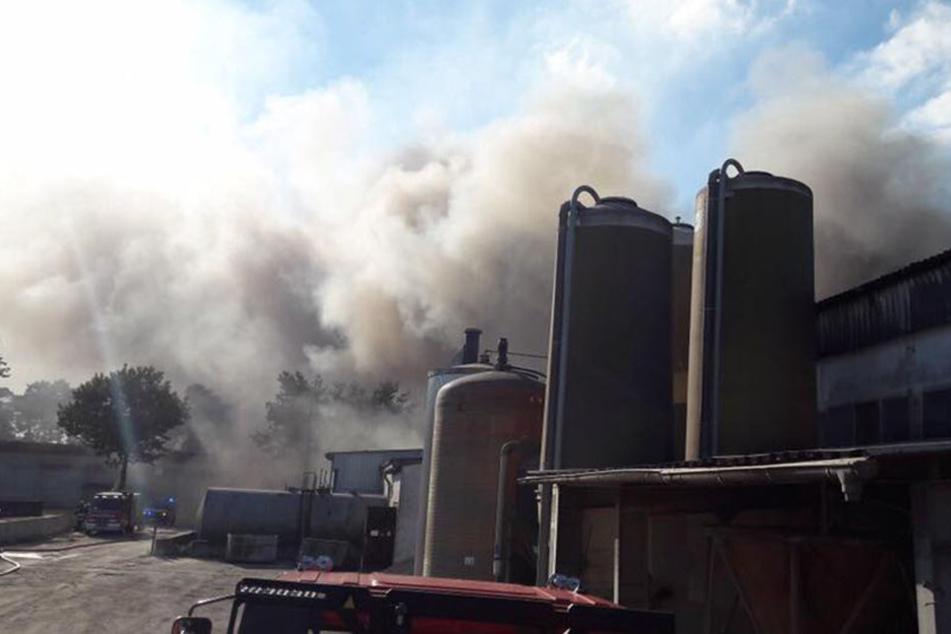 Über 2500 Schweine verbrennen bei Großfeuer im Stall
