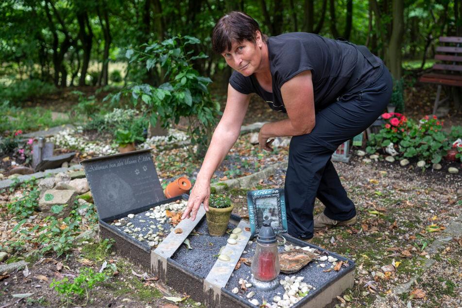 """Hier standen die Tierfiguren: Gudrun Hofmann (65) zeigt ein geplündertes Grab auf dem Tierfriedhof """"Am Rümpfwald""""."""