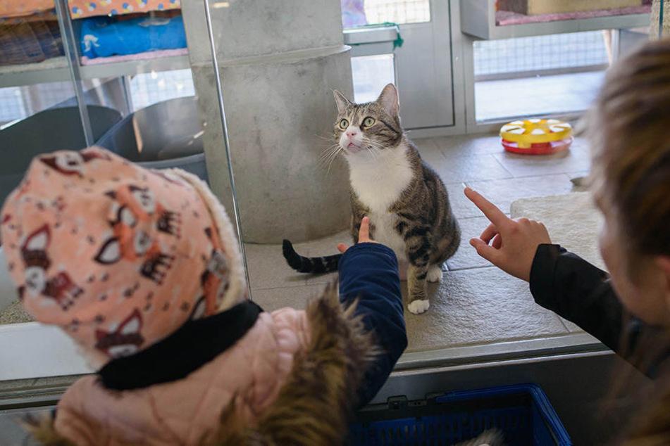 Haustiere sind keine Geschenke: Tierheime stoppen Vermittlung