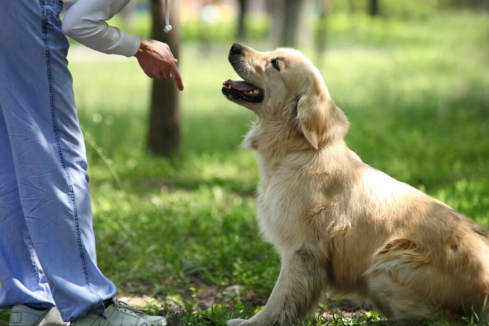 Hundebesitzer sollten nicht zum Animateur ihrer Welpen werden.