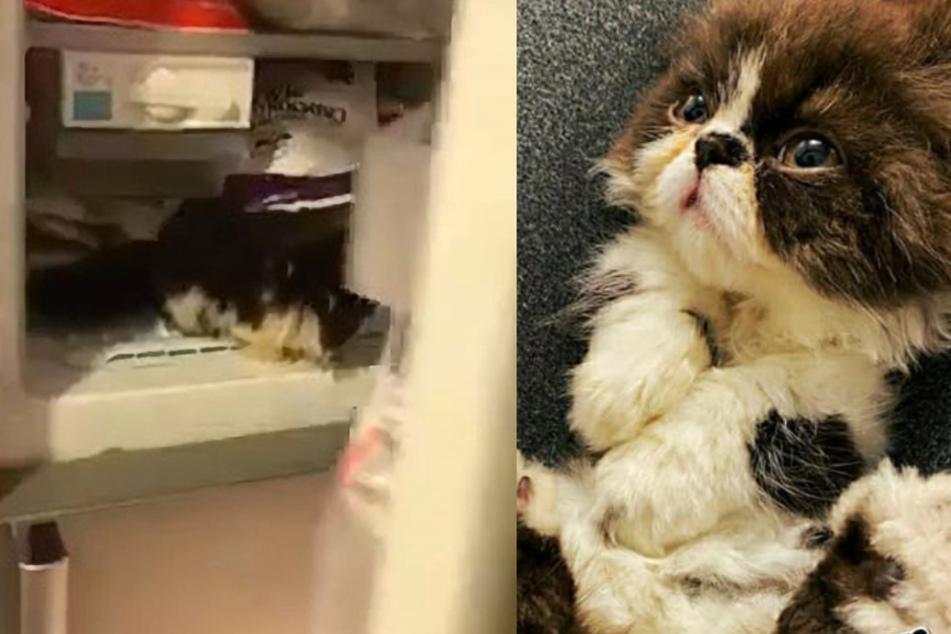 Grausames Facebook-Video zeigt, wie Mann Katze einfach in Gefrierschrank sperrt