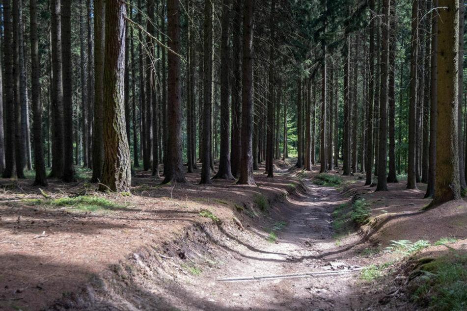 Die Drogen entdeckten die Kinder im Wald. (Symbolbild)