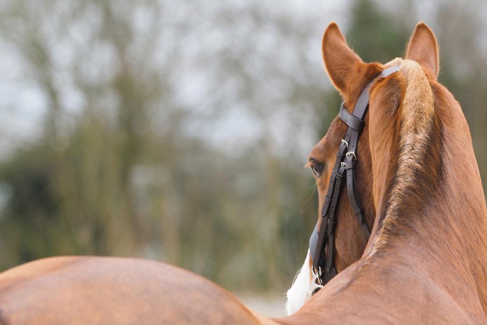 Frau (37) fällt vom Pferd und stirbt im Krankenhaus