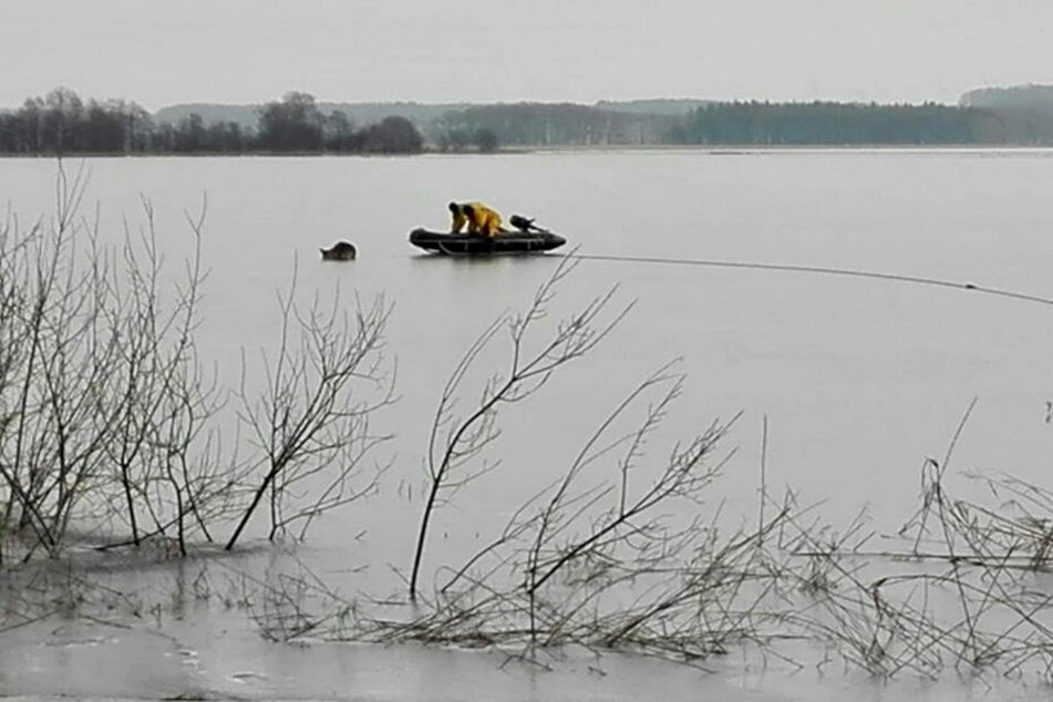 Mit einem Boot, an dem ein Eisschlitten war, wagte sich die Feuerwehr auf das Eis, um das Tier zu retten.
