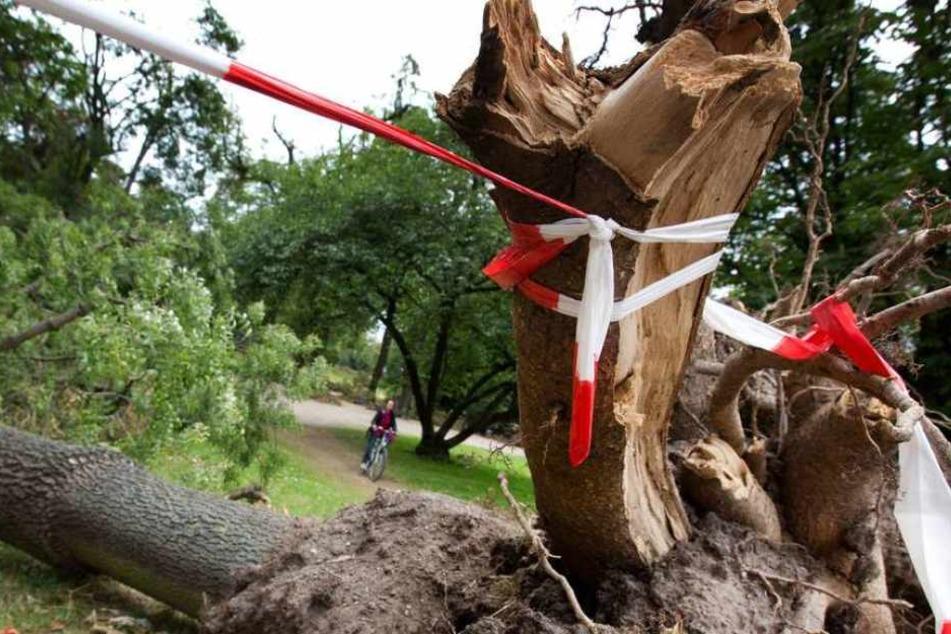 Das Holzteil fügte dem Mann eine tödliche Verletzung zu. (Symbolbild)