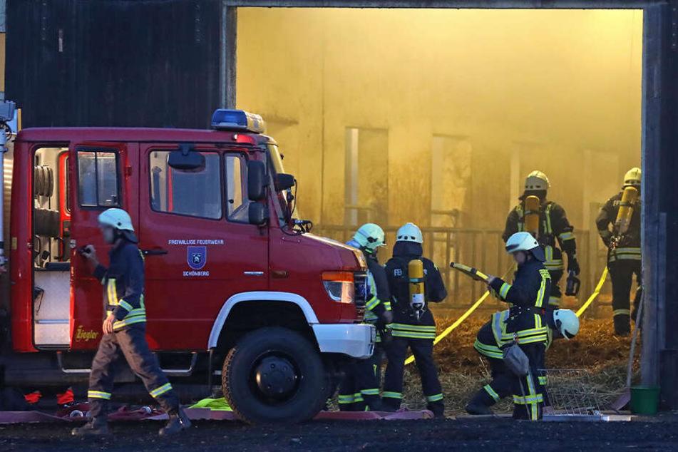 Großalarm: Feuerwehreinsatz in Rinderstall