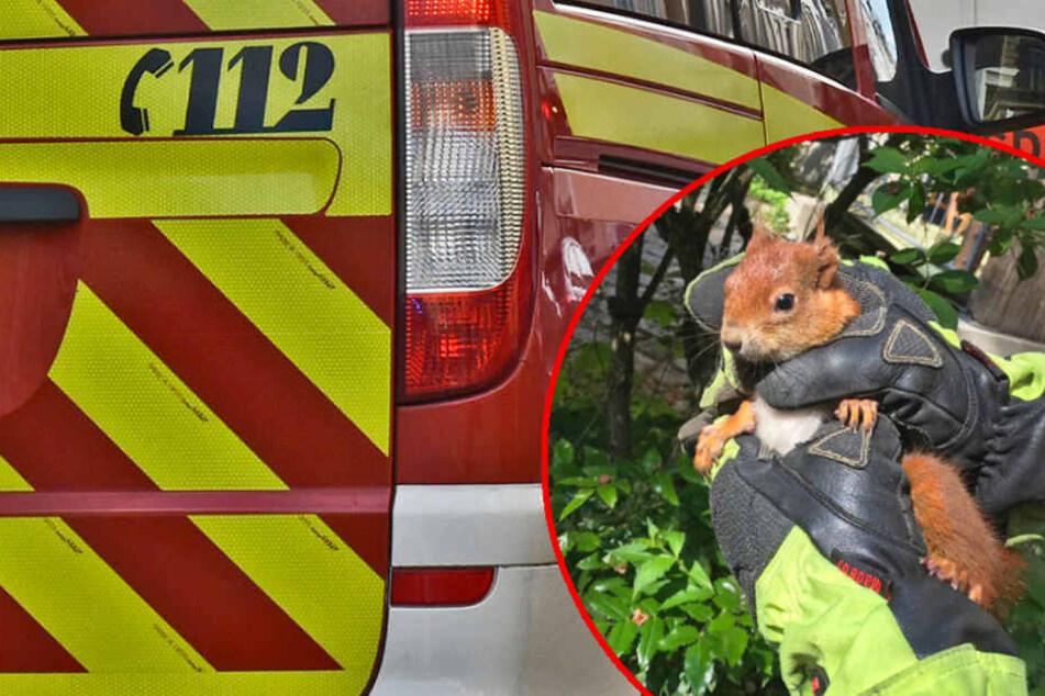 Eichhörnchen muss mit ungewöhnlichem Gerät aus misslicher Lage gerettet werden