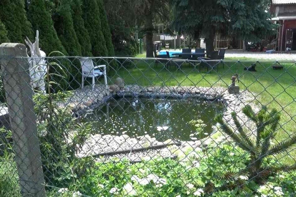 Drama im Garten! Junge (5) stürzt in Teich, wird wiederbelebt und stirbt doch
