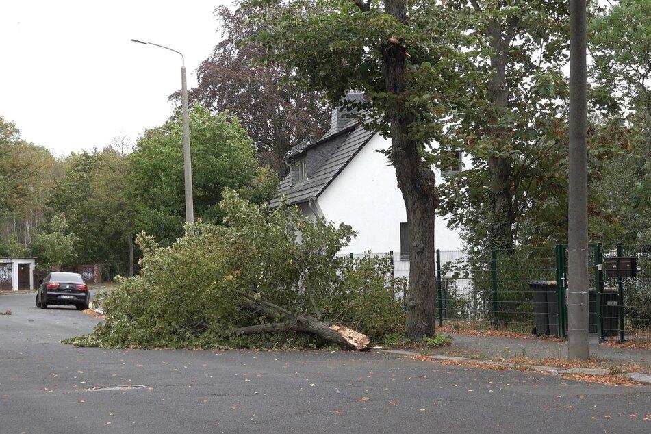 Die Feuerwehr hatte am Mittwoch mit zahlreichen abgebrochenen Ästen und Bäumen zu kämpfen.