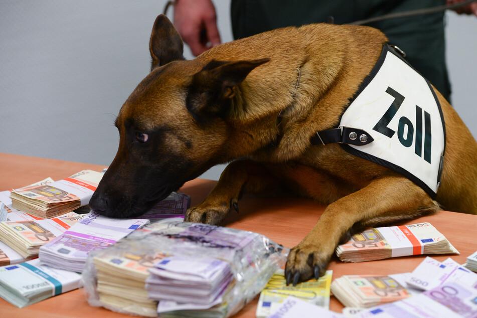 """""""Der Duft des Geldes"""": Dieser Hund hat ein Gespür für die ganz dicke Kohle"""