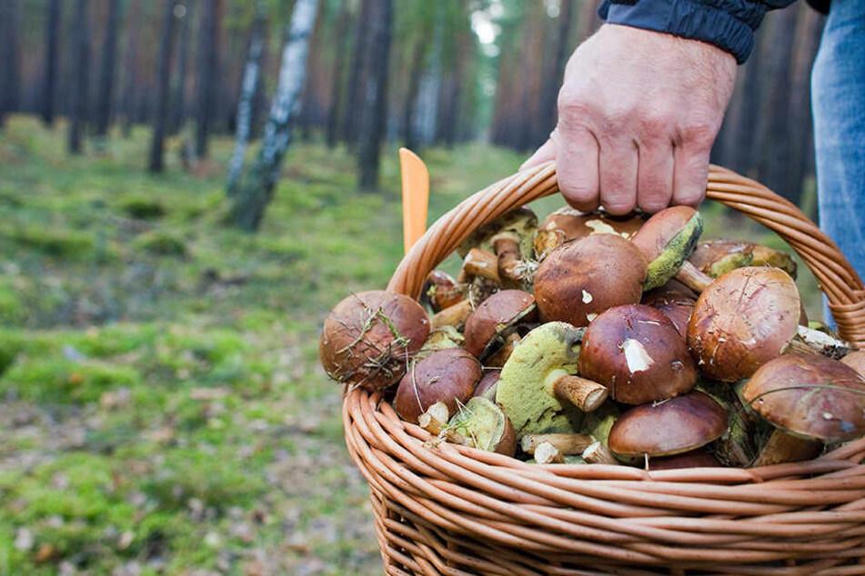 War es Mord? Pilzsammler findet menschliches Skelett in Heide
