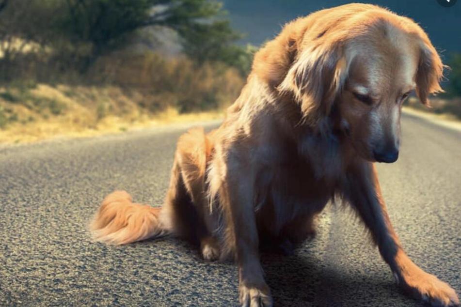 Beide Hunde starben in der Nacht zum Dienstag (Symbolbild).