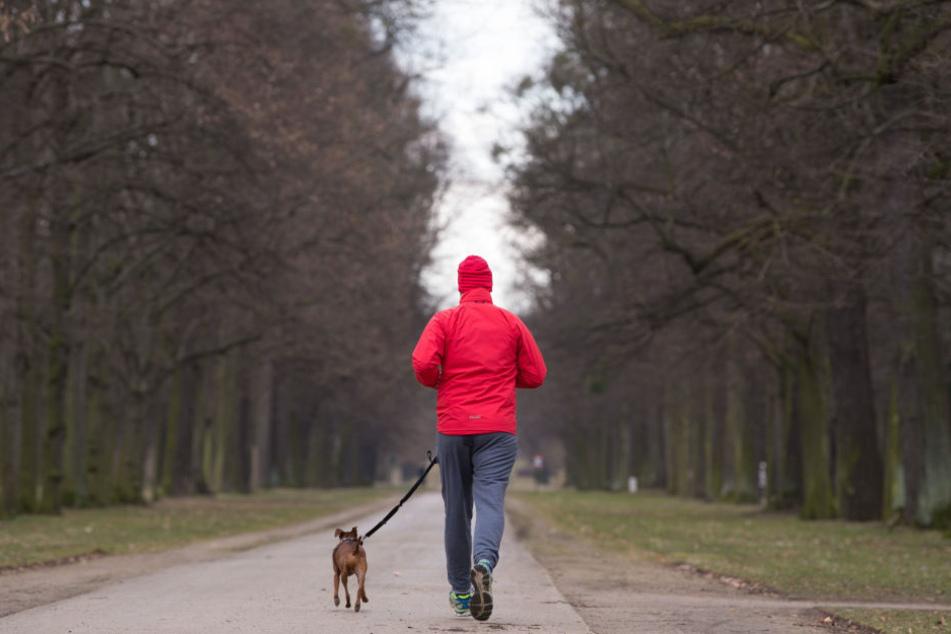 1,41 Millionen Euro spülen die Dresdner Hunde jährlich in die Stadtkasse.