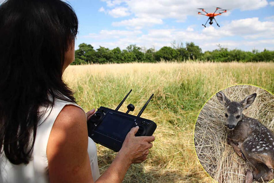 Rettung mit Drohne: Junge Rehe vor Mähdrescher gerettet