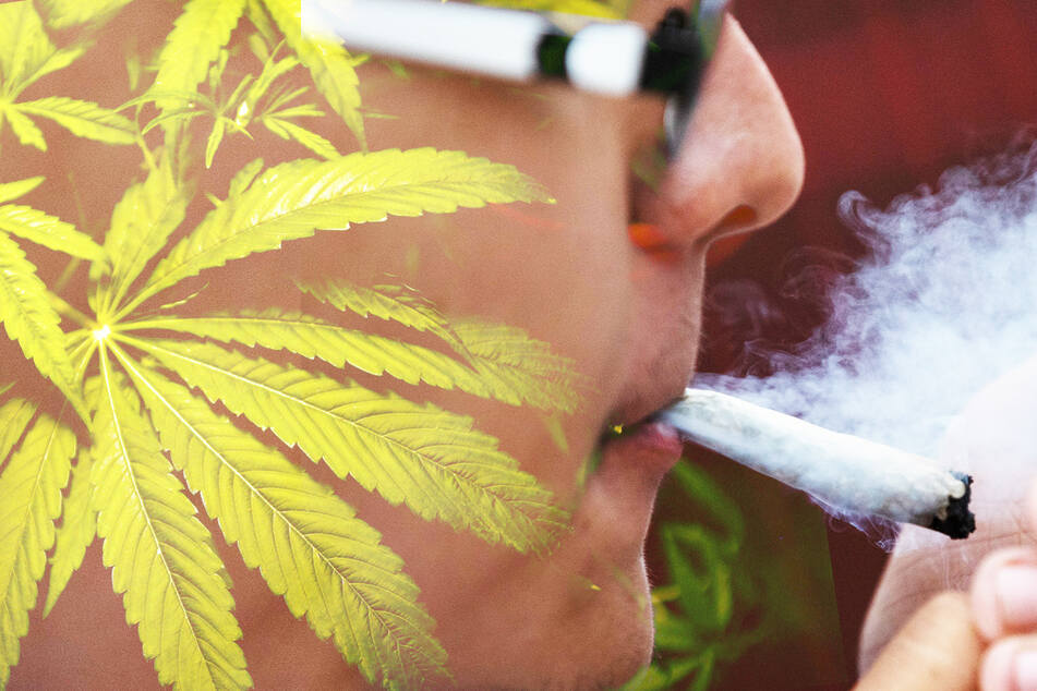 Cannabis kann nicht nur als illegale Rauchware, sondern auch für Medizinprodukte verwendet werden.