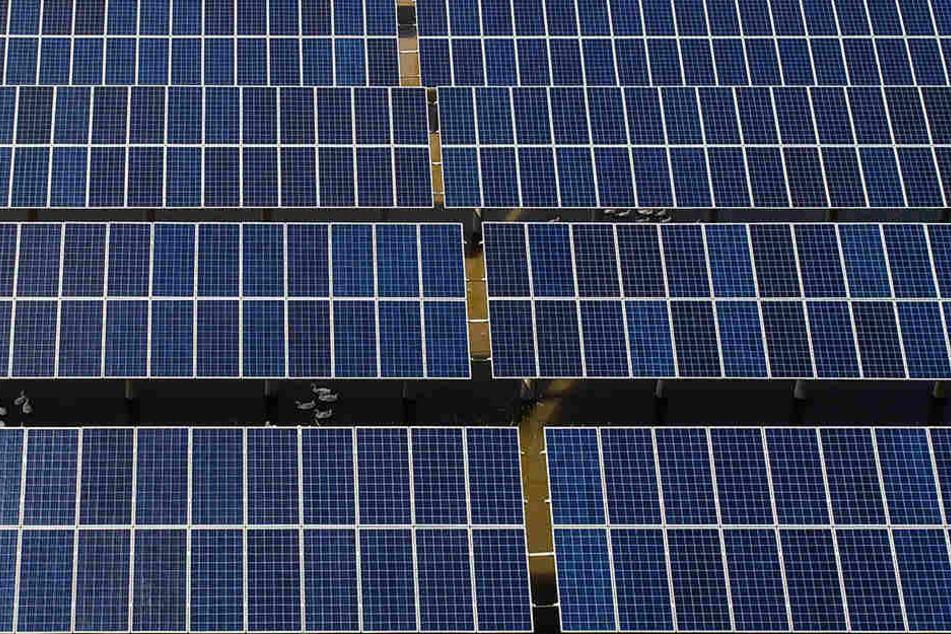 In Eppendorf haben Dieben 180 Solarmodule geklaut. (Symbolbild)