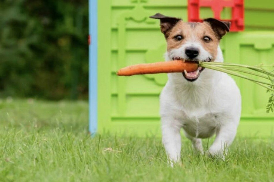 Vegan dog food: is a plant-based diet good for you dog?