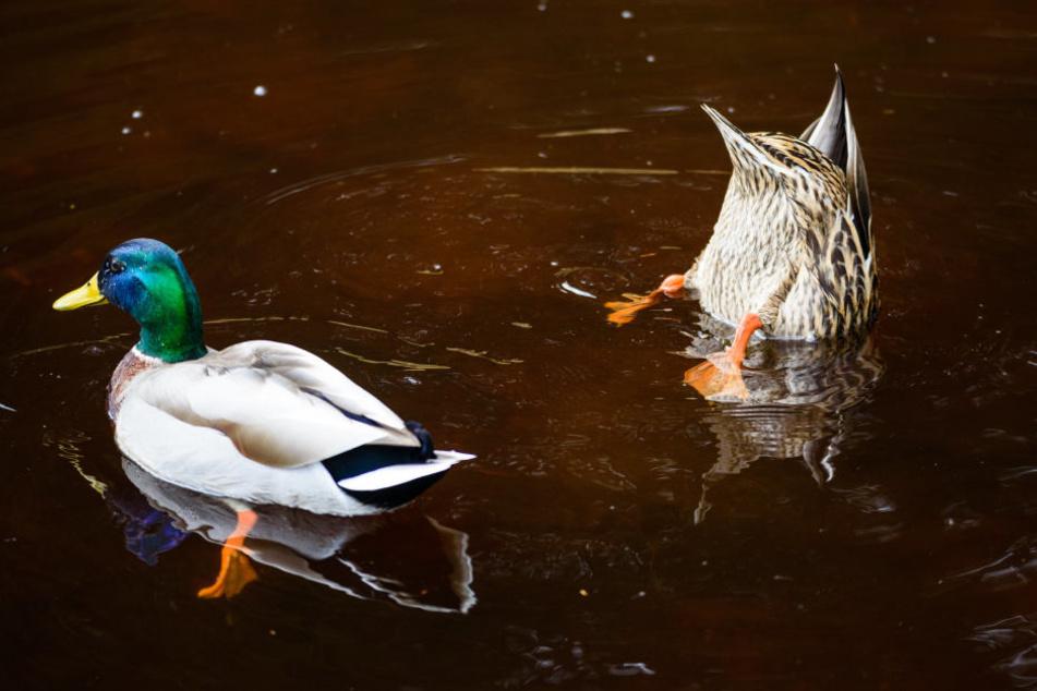 Wildvögel finden selbst in der kalten Jahreszeit noch genug zu Fressen.