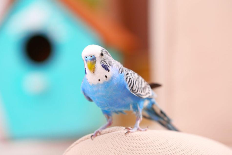 Weil ihr Vogel entflogen war, rief eine junge Frau die Polizei (Symbolbild).
