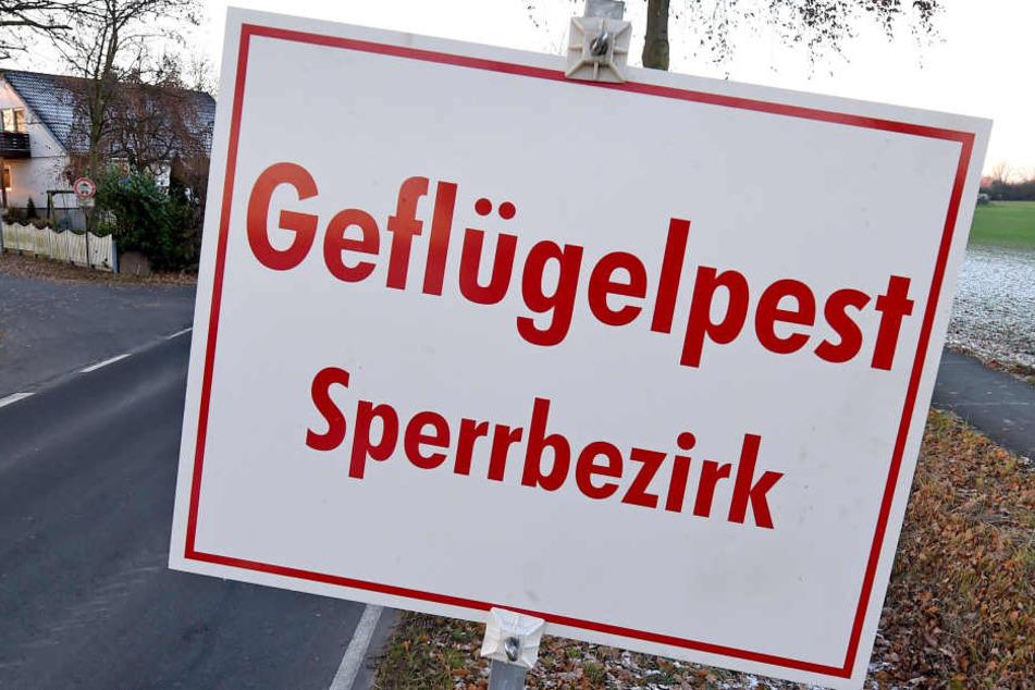 Der Sperrbezirk umfasst bereits die gesamte Stadt Mittweida sowie angrenzende Ortschaften.