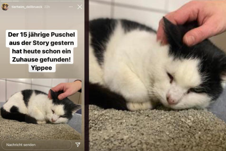 Der 15-jährige Kater Puschel aus dem Tierheim Köln-Dellbrück hat kurz vor Weihnachten ein Wunder erlebt.