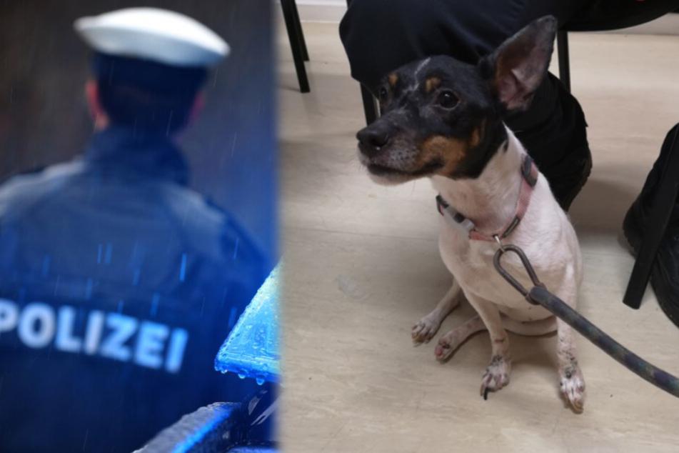 Hund ausgesetzt und an Baum festgebunden: Polizei sucht Herrchen