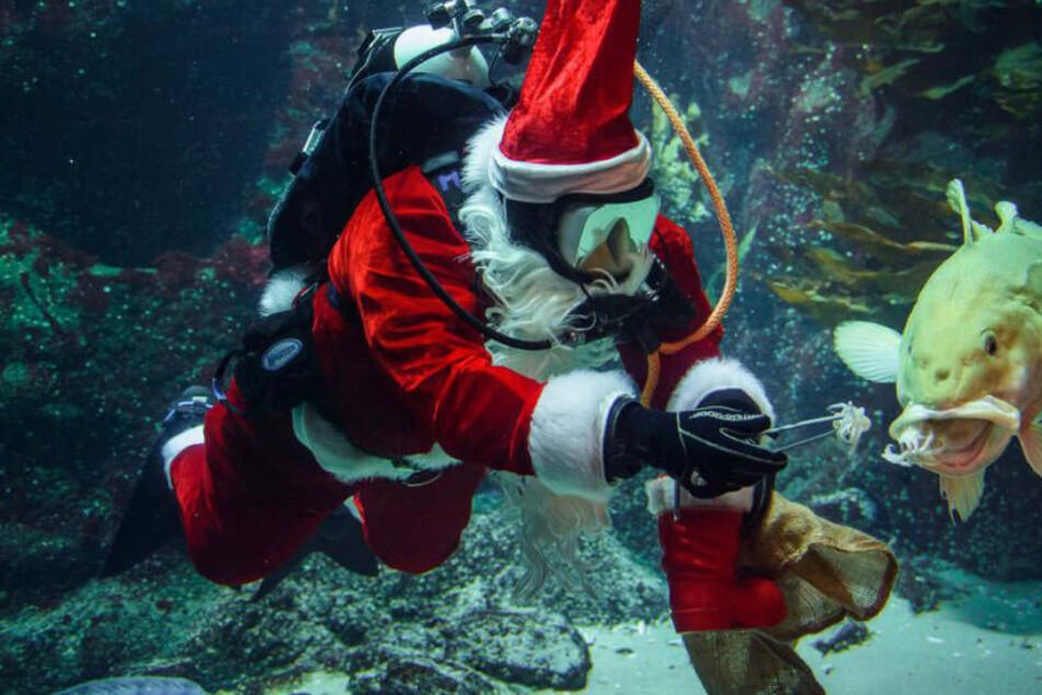 Dieser Nikolaus hat unter Wasser eine ganz besondere Mission