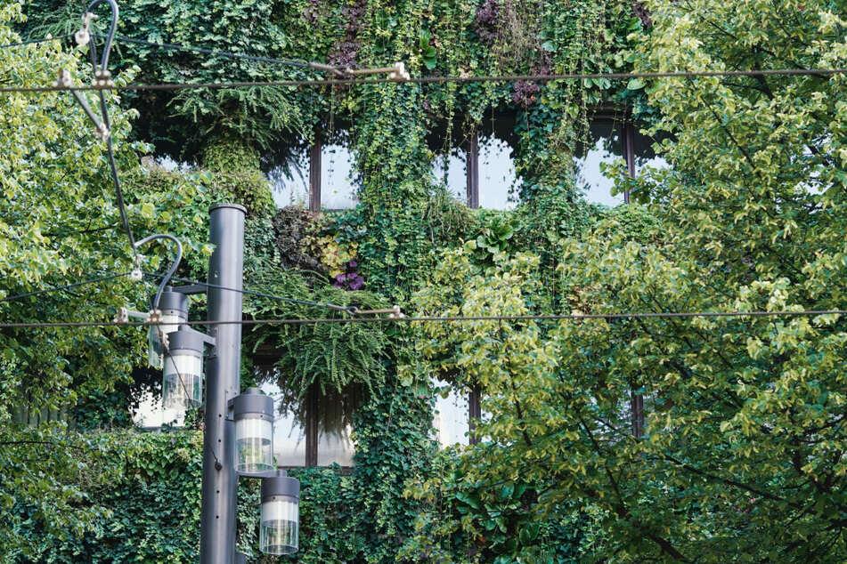 Dieses Haus in Mannheim ist an seiner gesamten Fassade mit Pflanzen bewachsen - dafür gab es nun sogar eine Auszeichnung.