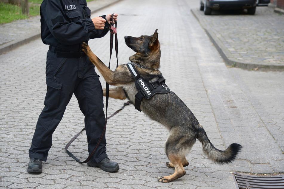 Mit Spürhunden versucht die Polizei, die Brandserie aufzuklären.