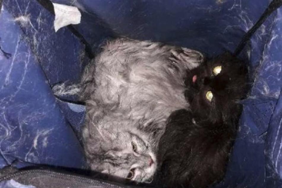 Zwei Katzen liegen in einem Sack und sind völlig durchnässt.