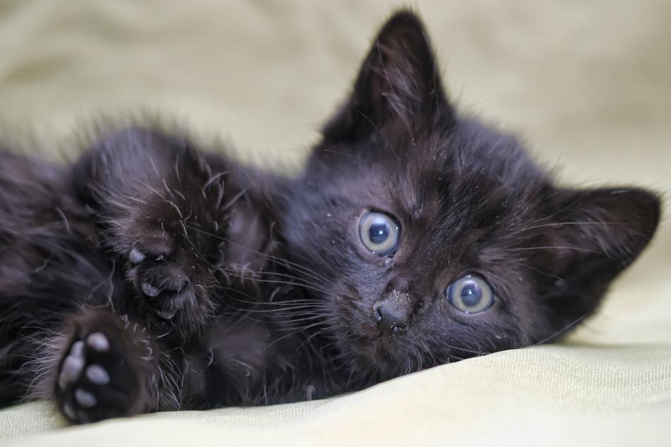 Katzen sind weiterhin mit Abstand die beliebtesten Haustiere in Deutschland - doch welche Namen bekommen sie von ihren Besitzern? (Symbolbild)