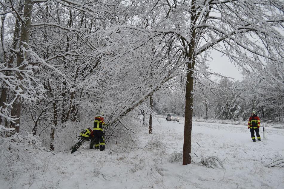 Auch an der S130 bei Krautz stürzten mehrere Bäume unter der Schneelast um, die Feuerwehr kam zum Einsatz.