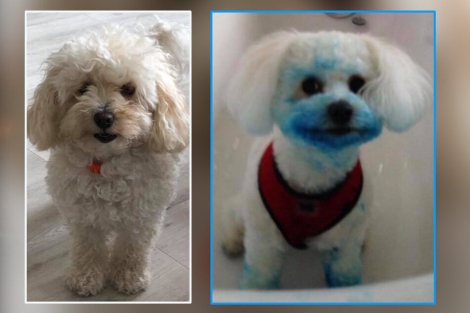 On the left we have Rosie on weekdays, on the right is her alternative Smurf look.