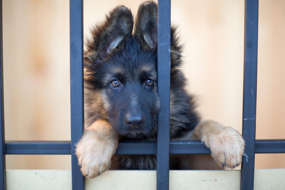 Sollte es keine Ausnahmeregel geben, brechen für Tierheime dunkle Zeiten an.