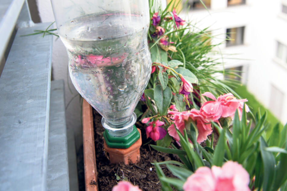 Mit Wasser gefüllte Flaschen werden auf die Ton-Kegel gesetzt. Sie versorgen die Pflanzen während des Urlaubs.
