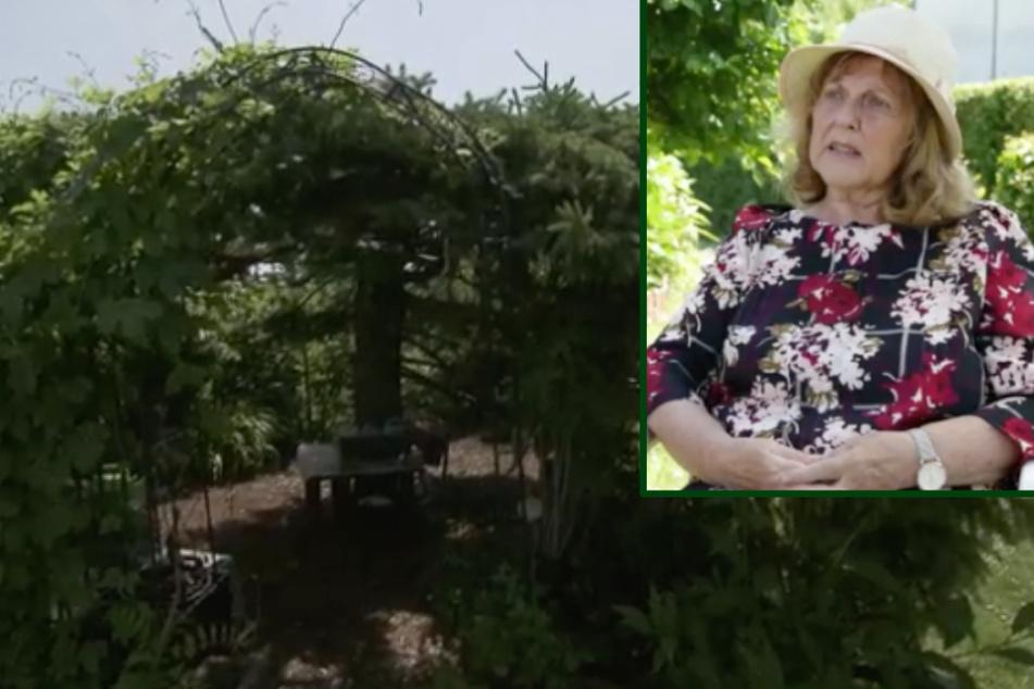 Absurde Forderung im Kleingarten: Annette (70) soll jahrzehnte alte Bäume fällen