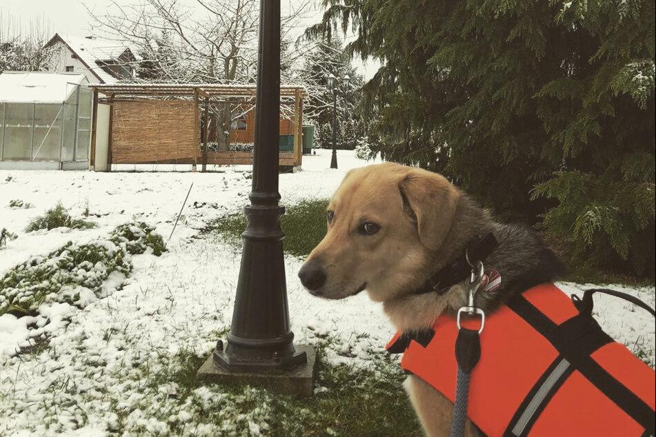 Will im Schnee toben und spielen: Mischlingshündin Peppels.