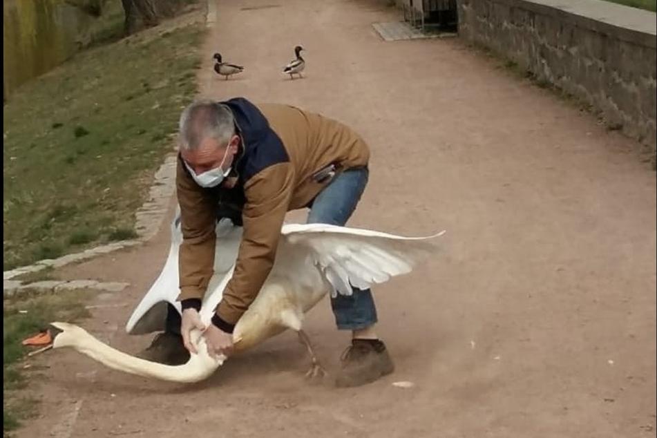 Ach du lieber Schwan! Die medizinischen Maßnahmen ließ sich der Wasservogel nicht gerne gefallen.
