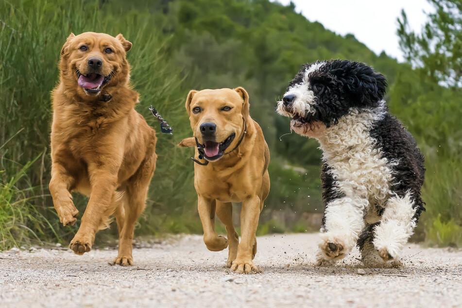 Kann das Bellen von Hunden bald übersetzt werden?