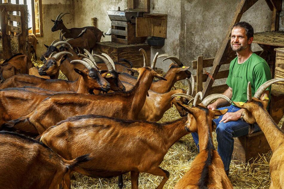 Rolf Seim (50) vom Ziegenhof Lauterbach inmitten seiner Tiere.
